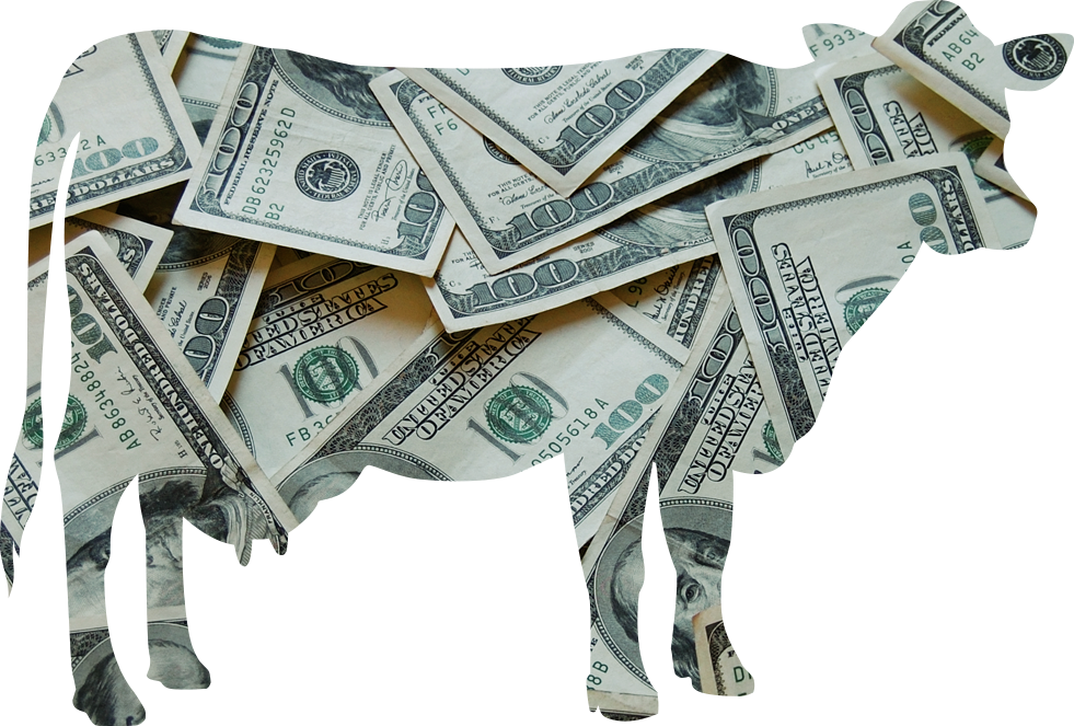 sacred cows of personal finance